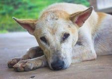 Perro en el fondo de Tailandia Fotografía de archivo