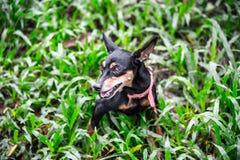 Perro en el jardín imagen de archivo libre de regalías