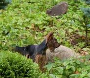 Perro en el jardín Foto de archivo libre de regalías