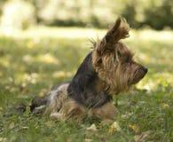 Perro en el jardín Foto de archivo