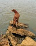 Perro en el lago imagenes de archivo