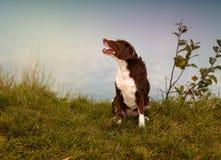 Perro en el lago Foto de archivo libre de regalías