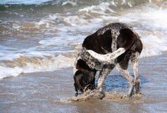 Perro en el mar Fotografía de archivo