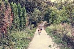 Perro en el medio del camino, Serbia Imagenes de archivo