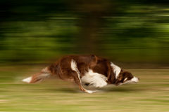 Perro en el movimiento Foto de archivo libre de regalías