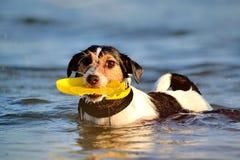 Perro en el océano Imagen de archivo libre de regalías