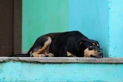 Perro en el pórtico en Varadero Imágenes de archivo libres de regalías