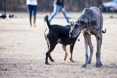 Perro en el parque Fotos de archivo