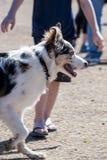 Perro en el parque Imagen de archivo