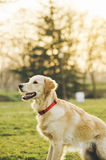 Perro en el parque Imagenes de archivo