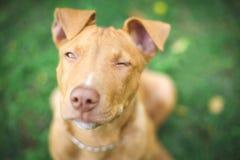 Perro en el parque Imagen de archivo libre de regalías