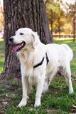 Perro en el parque de la ciudad Imágenes de archivo libres de regalías