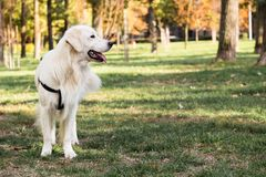 Perro en el parque de la ciudad Imagenes de archivo
