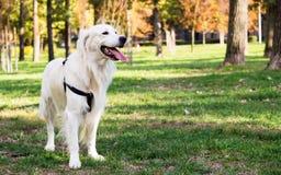 Perro en el parque de la ciudad Fotos de archivo
