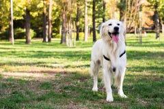 Perro en el parque de la ciudad Fotos de archivo libres de regalías