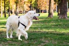 Perro en el parque de la ciudad Foto de archivo