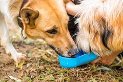 Perro en el parque que bebe del cuenco de consumición Imágenes de archivo libres de regalías