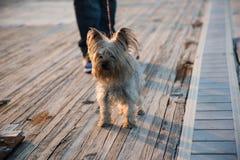 Perro en el paseo Fotografía de archivo
