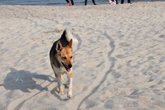 Perro en el paseo de la playa cerca del mar imagenes de archivo
