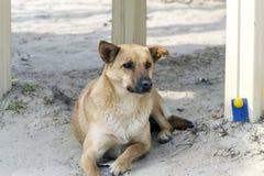 perro en el patio Fotos de archivo