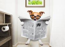 Perro en el periódico de la lectura del asiento de inodoro foto de archivo libre de regalías