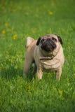 Perro en el prado Imagen de archivo