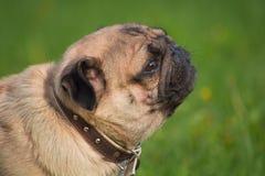 Perro en el prado Fotografía de archivo libre de regalías
