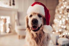 Perro en el ` s Eve del Año Nuevo foto de archivo libre de regalías
