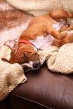 Perro en el sofá imagen de archivo