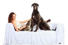 Perro en el sofá Imagen de archivo libre de regalías
