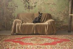Perro en el sofá Fotos de archivo