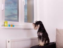 Perro en el sofá Fotografía de archivo libre de regalías