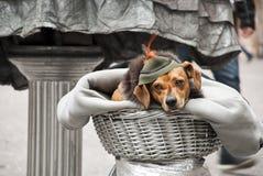 Perro en el sombrero, como un fragmento de una estatua viva fotografía de archivo