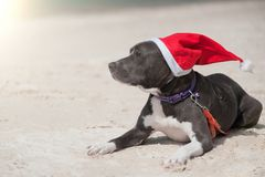 Perro en el sombrero de Papá Noel en la playa imágenes de archivo libres de regalías