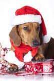 Perro en el sombrero de santa foto de archivo libre de regalías