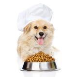 Perro en el sombrero del cocinero que miente con un cuenco de comida de perro seca Aislado Foto de archivo