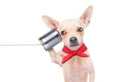 Perro en el teléfono Imagen de archivo libre de regalías