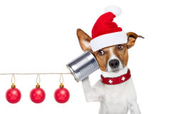 Perro en el teléfono Fotos de archivo