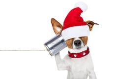 Perro en el teléfono Imagenes de archivo