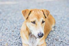 Perro en el templo Foto de archivo libre de regalías