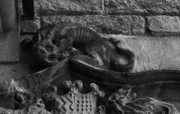 Perro en el top Imagen de archivo libre de regalías