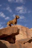 Perro en el top del acantilado Fotografía de archivo libre de regalías