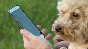Perro en el toque a muerto del anfitrión almacen de video
