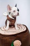 Perro en el traje Imágenes de archivo libres de regalías