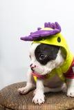Perro en el traje Fotografía de archivo libre de regalías