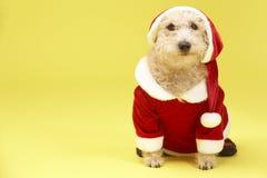 Perro en el traje de Santa imagenes de archivo