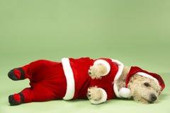 Perro en el traje de Santa Fotografía de archivo