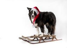 Perro en el trineo imagenes de archivo