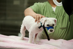 Perro en el veterinario Foto de archivo
