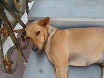Perro en escaleras Fotos de archivo